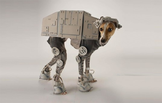 Cosplay Star Wars Chien