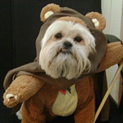 Cosplay Star Wars Chien 3
