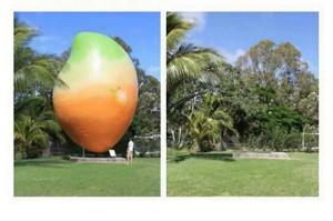 Disparition de Big Mango, mangue géante en Australie