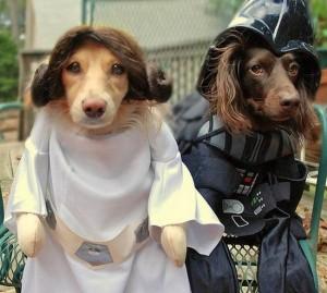 Cosplay Star Wars Chien 2
