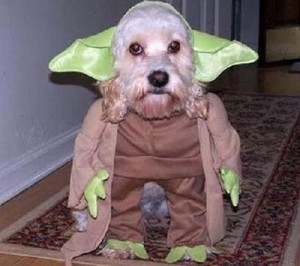 Cosplay Star Wars Chien